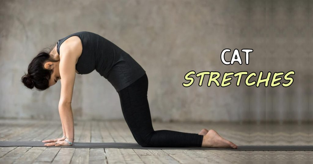 cat stretch exercise for pain rehab